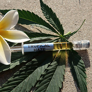 Buy CO2 Extracted Cannabis Oil